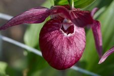 Free Orchid Stock Images - 25044734