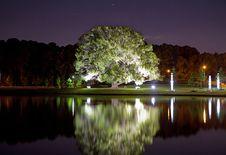 Free Tree Illumination Royalty Free Stock Images - 25046059