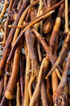 Free Kelp Seaweed Laminaria Hyperborea Stock Image - 25047731