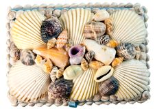 Free Shells Stock Photos - 25048013