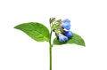 Free Wild Flower Royalty Free Stock Photo - 25050695
