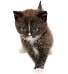 Free Kitten Royalty Free Stock Photography - 25053047