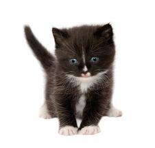 Free Kitten Royalty Free Stock Photos - 25053208