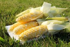 Free Fresh Corn On The Grass Stock Photography - 25054582