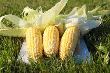 Free Fresh Corn On The Grass Royalty Free Stock Images - 25054589
