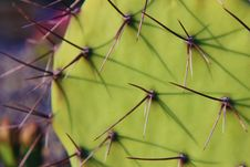 Prickly Pear Cactus Royalty Free Stock Photography