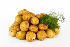 Free Potatoes Royalty Free Stock Photography - 25060307