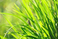 Free Sunlit Green Summer Grass Stock Images - 25061104