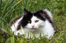Free Black And White Cat Stock Images - 25063384