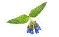 Free Wild Flower Royalty Free Stock Image - 25074616