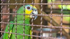 Free Parrot In A Cage Royalty Free Stock Images - 25072419
