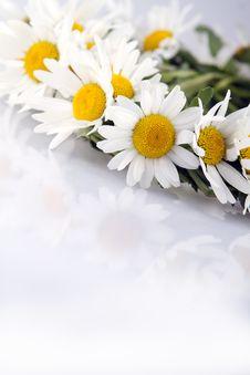 Free Daisy Stock Photography - 25072752