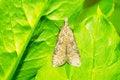 Free Moth Stock Photography - 25092242