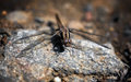 Free Dragonfly Macro Stock Images - 25093254