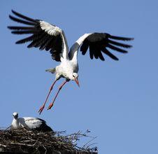 Free White Stork Stock Photo - 25091530