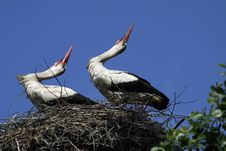 Free Storks Stock Photography - 25091562