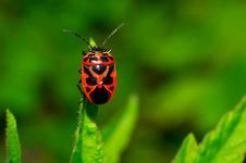 Free Bug Stock Photos - 25092153