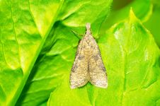 Free Moth Stock Photography - 25092242