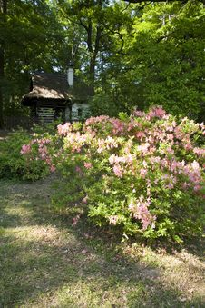 Free Rhododendron Bush Stock Photography - 25096242