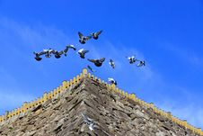 Free Flying Pigeons Leading A Carefree Life Stock Photography - 25099462