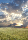Free Wheat Field During Stormy Day Royalty Free Stock Photos - 2512408