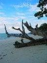 Free Thailand - Paradise Beach VIII Stock Photography - 2516062