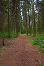 Free Forest Trail Stock Photo - 2518920