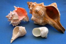 Four Shells Stock Images