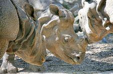 Free Rhinoceros 2 Stock Photos - 2513213