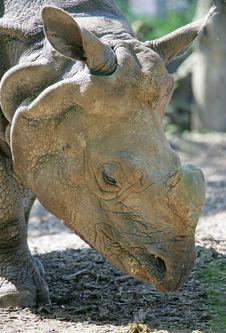 Free Rhinoceros 6 Royalty Free Stock Photography - 2514207