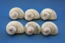 Free Six White Shells Royalty Free Stock Image - 2515816