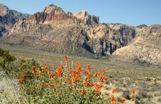 Free Red Rock Canyon Spring Flowers Royalty Free Stock Photography - 2515977