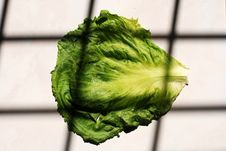 Free Green Cabbages Royalty Free Stock Photo - 2516285