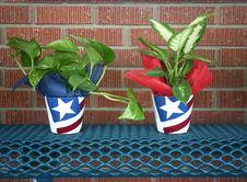 Free Plant Royalty Free Stock Image - 2516466