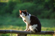 Rural Cat Sitting On Fence Stock Photos