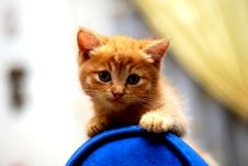 Free Cute Kitten Royalty Free Stock Photography - 2516947
