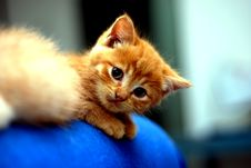 Free Cute Kitten Royalty Free Stock Photography - 2517097