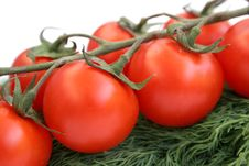 Free The Branch Of Cherry-tomatoes Royalty Free Stock Photography - 2517177