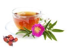 Free Rose Hip Tea Royalty Free Stock Images - 25100779