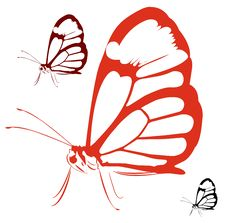 Free A Huge Black And White Butterfly Stock Image - 25105721