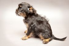 Free Puppy Stock Photography - 25108922