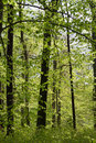 Free Forest In Springtime Royalty Free Stock Photography - 25120617