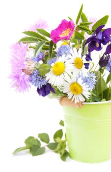 Free Wild Flowers Royalty Free Stock Photos - 25126398