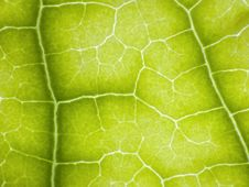 Free Leaf Texture Stock Photo - 25128490