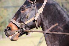 Free Close Up Of Horse S Head Stock Photography - 25129242