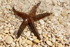 Free Brown Sea Star Stock Images - 25132114
