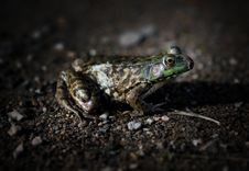 Frog Side Dark Stock Images