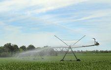 Free Watering Corn Royalty Free Stock Photo - 25137985