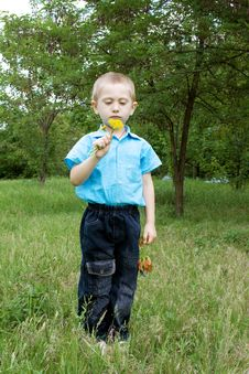 Little Boy With Dandelion Royalty Free Stock Photo