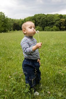 Free Cute Boy Blowing On Dandelion In Summer Ti Royalty Free Stock Photo - 25141165